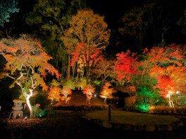 町立湯河原美術館の紅葉