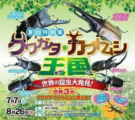 夏の特別展「クワガタ・カブトムシ王国 世界の昆虫大発見!」