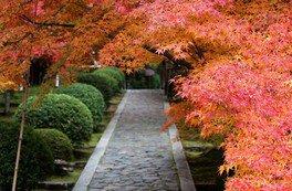 四季折々の風情が楽しめる石畳の参道
