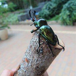 虫ねーさんとわくわく昆虫展