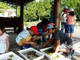 平井先生の生き物観察会と昆虫標本教室