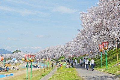 2021岡山さくらカーニバル【花見不可(中止)】