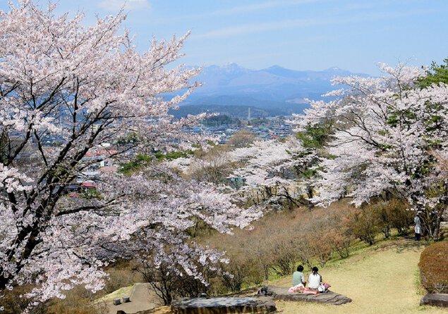 長峰公園の桜