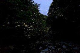 第31回 名水白山川ホタル祭り