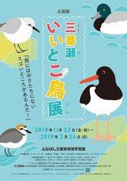企画展「三番瀬いいとこ鳥展」