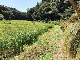 里山で青竹料理に挑戦!〜親子の自然体験プログラム〜