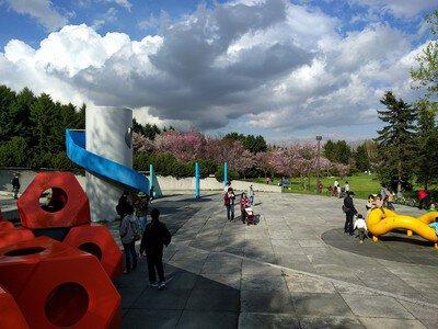 モエレ沼公園サクラの森の桜