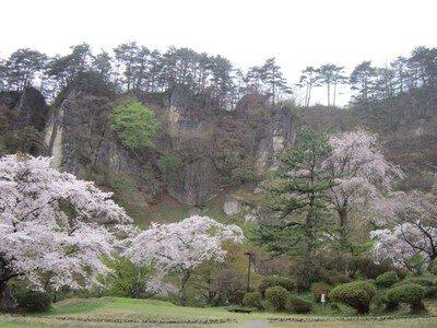 きみまち阪県立自然公園の桜