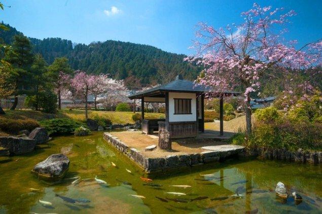 【桜・見ごろ】小次郎公園