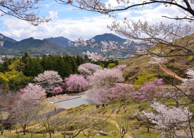 かみかわ桜の山「桜華園」開園