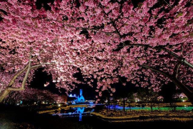 なばなの里 イルミネーション2020-2021 花と光の競演