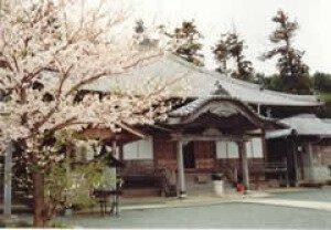 【桜・見ごろ】沖浦観音(瑞龍寺)