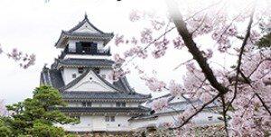 【桜・見ごろ】高知公園