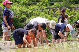農に学べ!遊べ!お田植と小梅の収穫体験