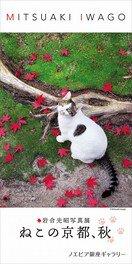 岩合光昭写真展 「ねこの京都、秋」