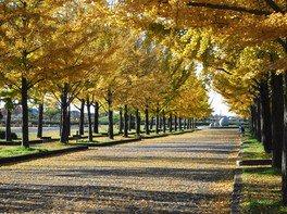 加須はなさき公園の紅葉