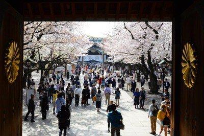 靖國神社の桜