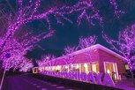 冬桜イルミネーション2020