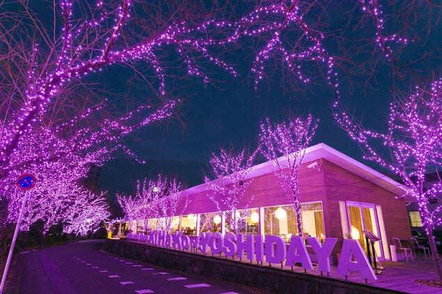 冬桜イルミネーション2018
