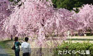 竹田の里 しだれ桜まつり
