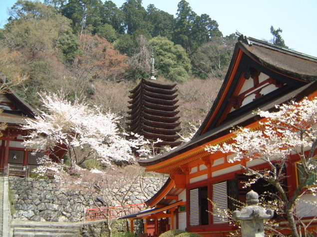 【桜・見ごろ】談山神社