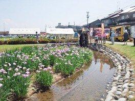 2018おやべ祭り 花菖蒲祭り