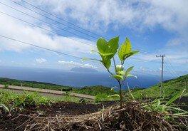 第229回 三宅島森林再生植林ボランティア