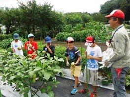 夏休み自由研究 伝統野菜の収穫と昔の暮らし体験