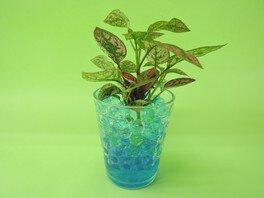 カラージェルで植物を育てよう