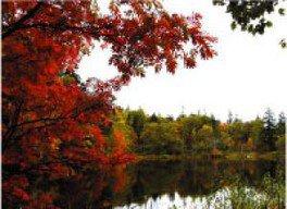 【紅葉・見ごろ】松山湿原