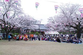 都立滝山公園 国史跡滝山城跡の桜