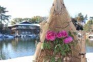 寒を遊ぶ徳川園の冬牡丹