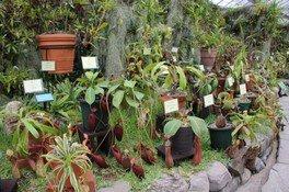 兵庫県立フラワーセンター 食虫植物特別展示