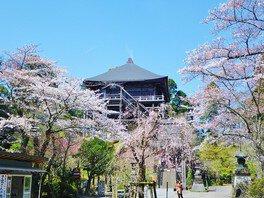 境内に咲く桜が鮮やかに色づく