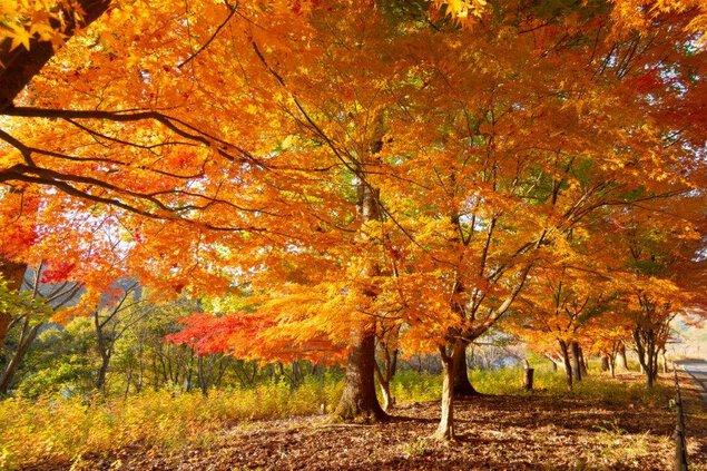 八千代湖(土師ダム)の紅葉