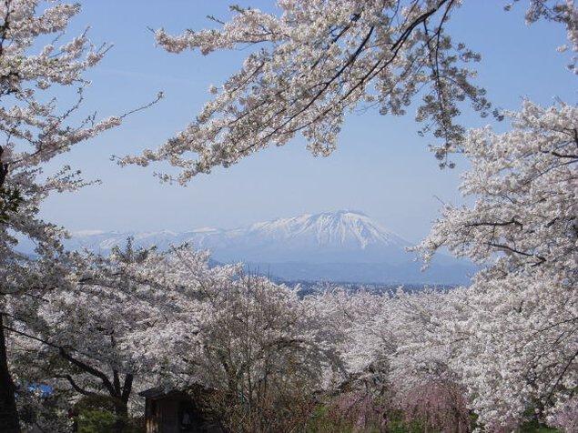 紫波城山桜ウィーク
