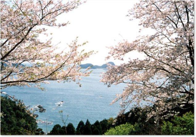 【桜・見ごろ】旧国道388号沿いの桜並木