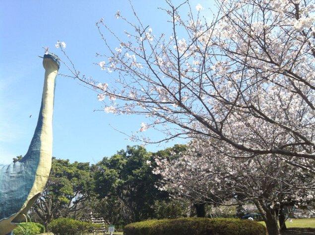 【桜・見ごろ】桜島自然恐竜公園
