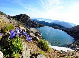 花の白山登山