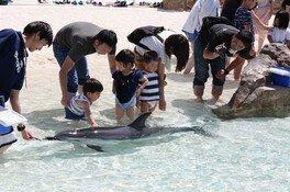イルカのふれあいタイム