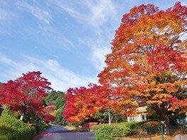 ひろしま遊学の森 広島県緑化センターの紅葉