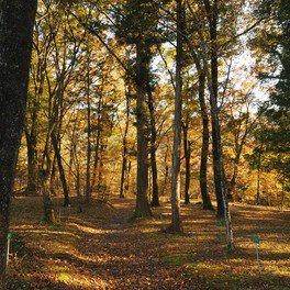 日光植物園の紅葉