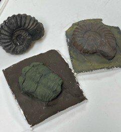 埼玉県立松山女子高校地学部 公開講座「化石のレプリカを作ろう!」