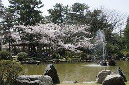 【駐車場閉鎖・施設使用中止】白山公園の桜