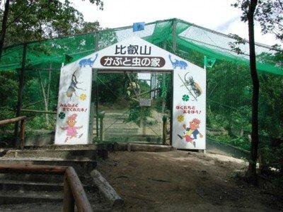 かぶと虫の家