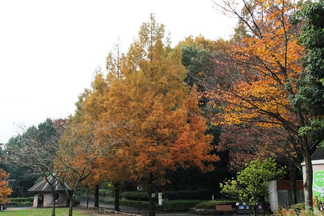 横浜市立金沢動物園の紅葉