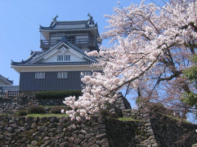 【桜・見ごろ】亀山公園