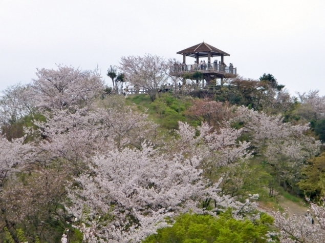 高津子山 桜ウォーク