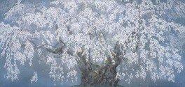 弘前観桜会100周年記念「花とサムライ」