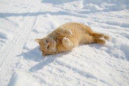 写真展 ゆきにゃんー厳冬に生きる北の猫ー